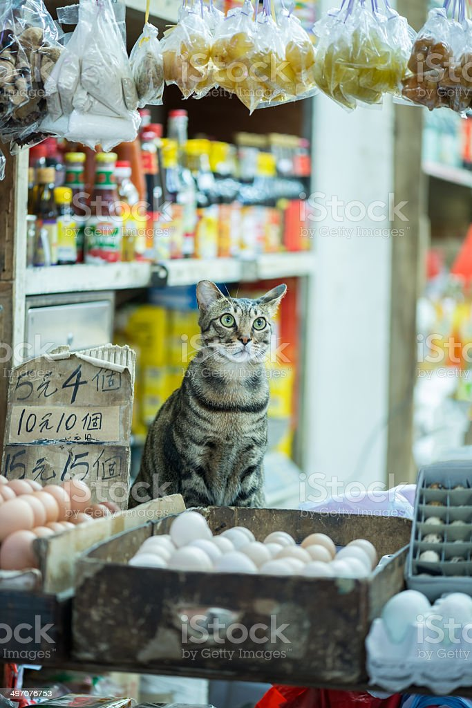 Fortune Cat Sitting in Store Front for Good Luck stock photo