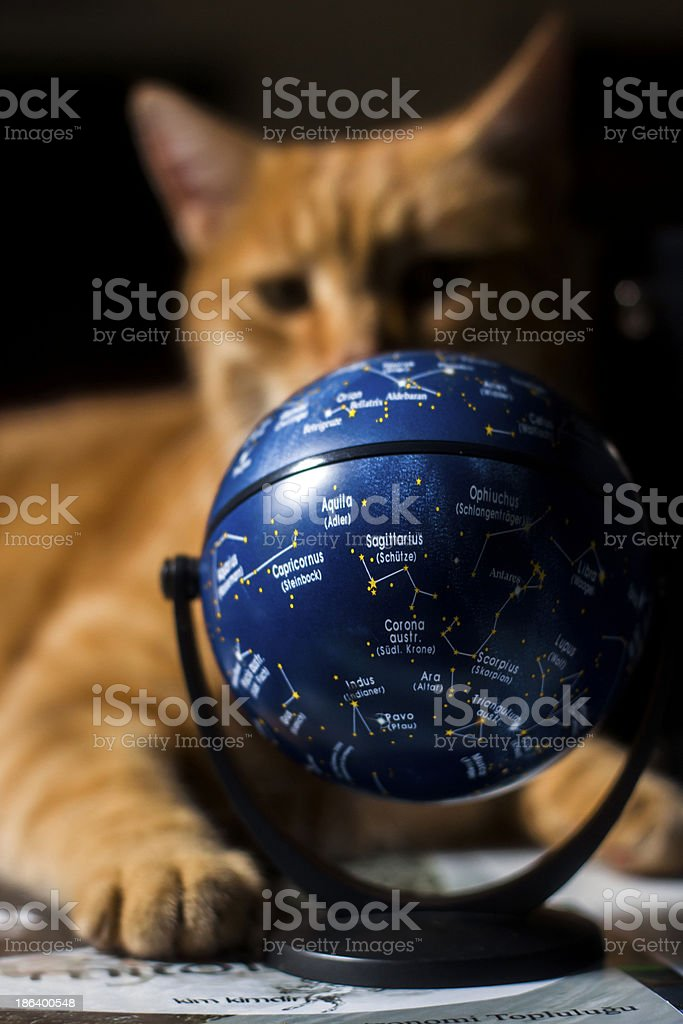 Fortune Teller Cat royalty-free stock photo