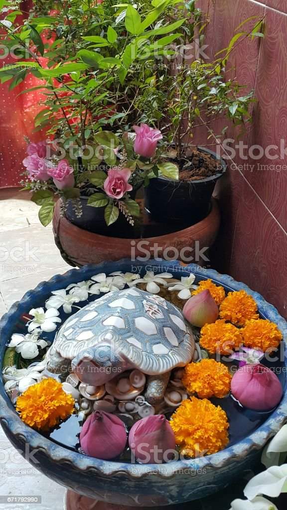 Fortune turtle in the lotus basin. stock photo
