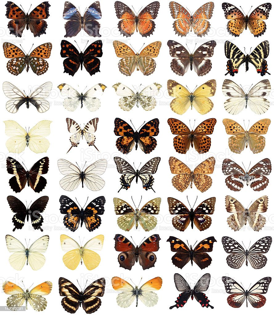 Forty  butterflies royalty-free stock photo