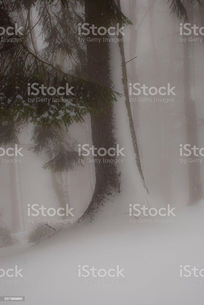 Foschia nel bosco stock photo