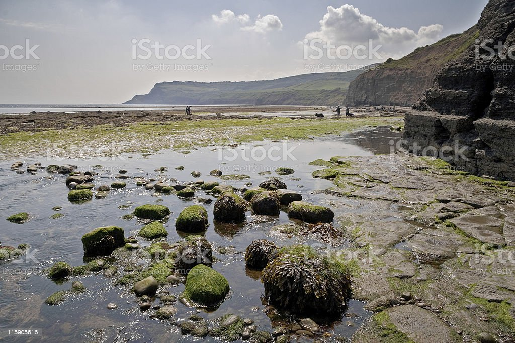 Fossicking on the beach royalty-free stock photo
