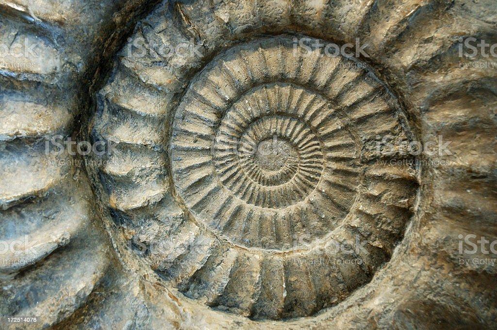Fossil Ammonite Close-Up stock photo