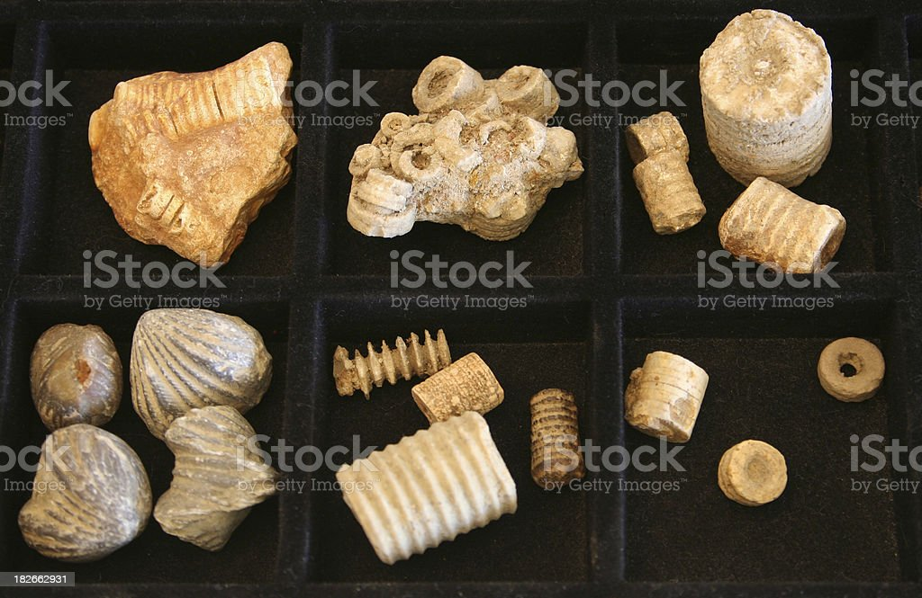 Fossil Collection stock photo