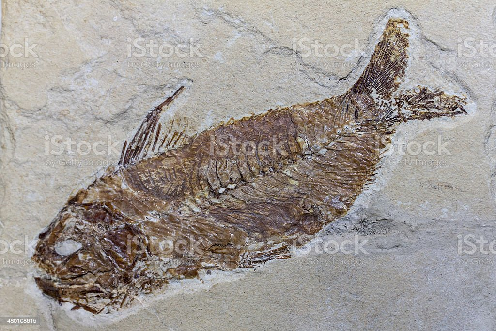 Fossil Fish stock photo