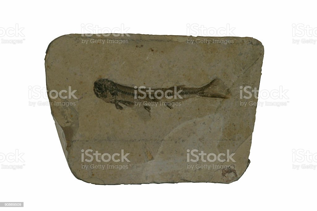 Fossil Fish royalty-free stock photo