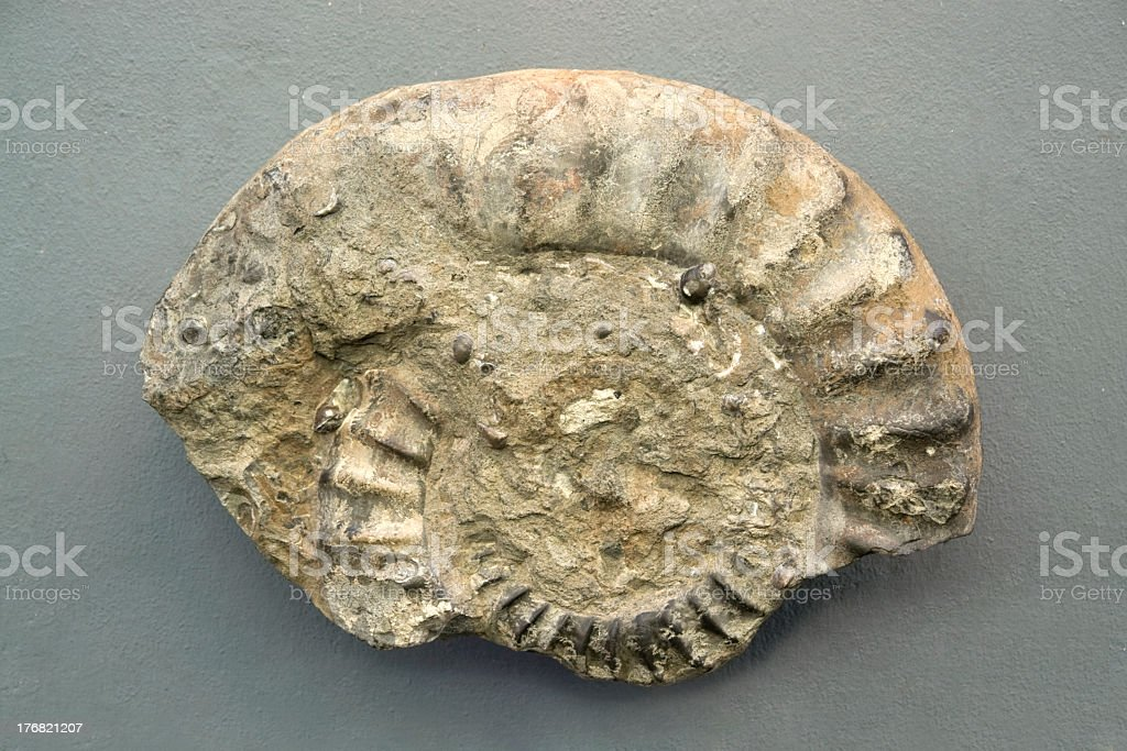 fossil fragment stock photo