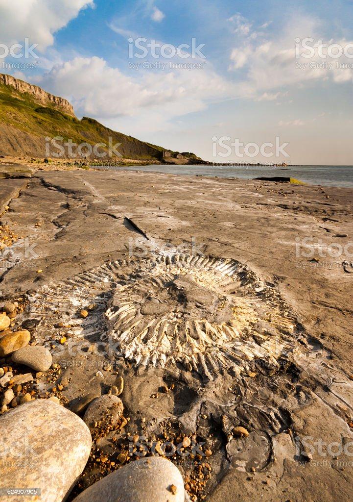 Fossil hunting on the Dorset coastline stock photo