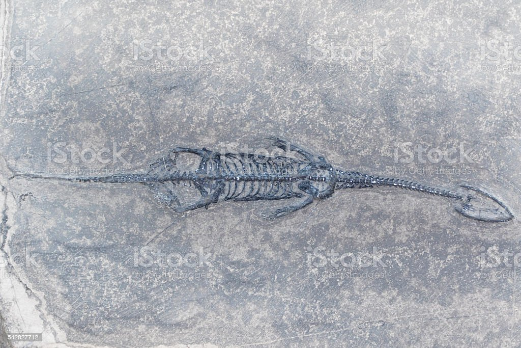 Fossil Keichousaurus - Dinosaur Skeleton stock photo