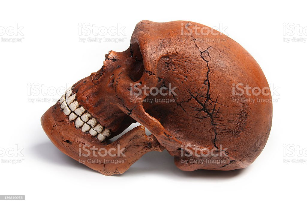 Fossil Neanderthal skull stock photo