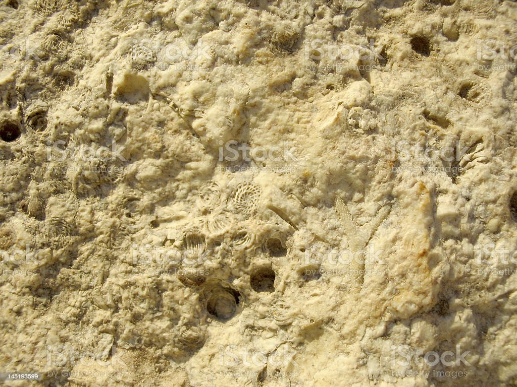 fossil of limestone royalty-free stock photo