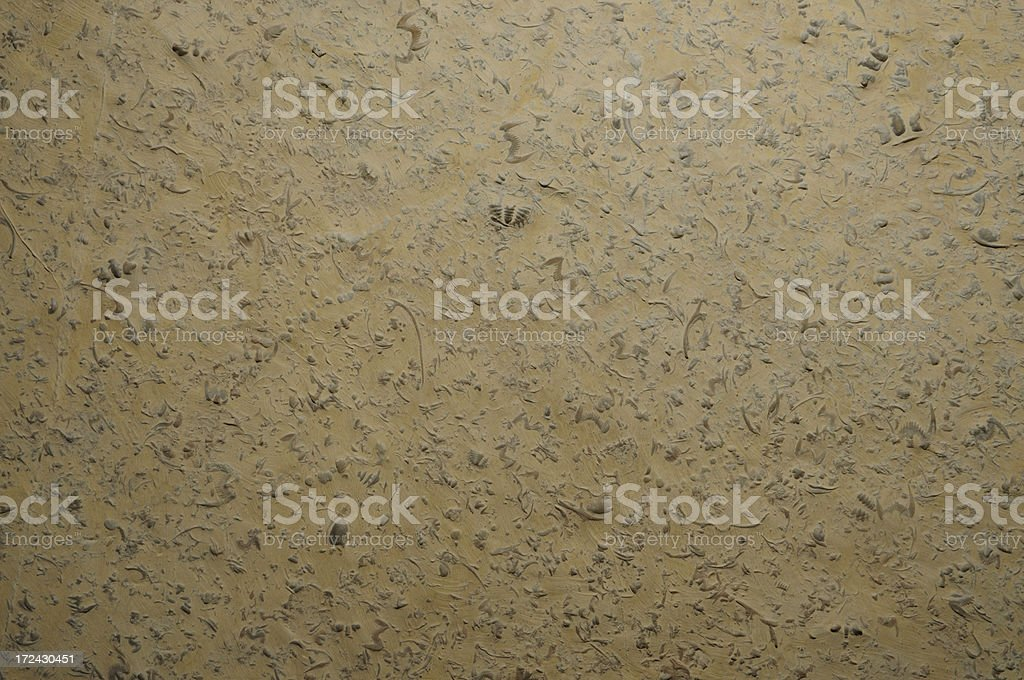 Fossil royalty-free stock photo