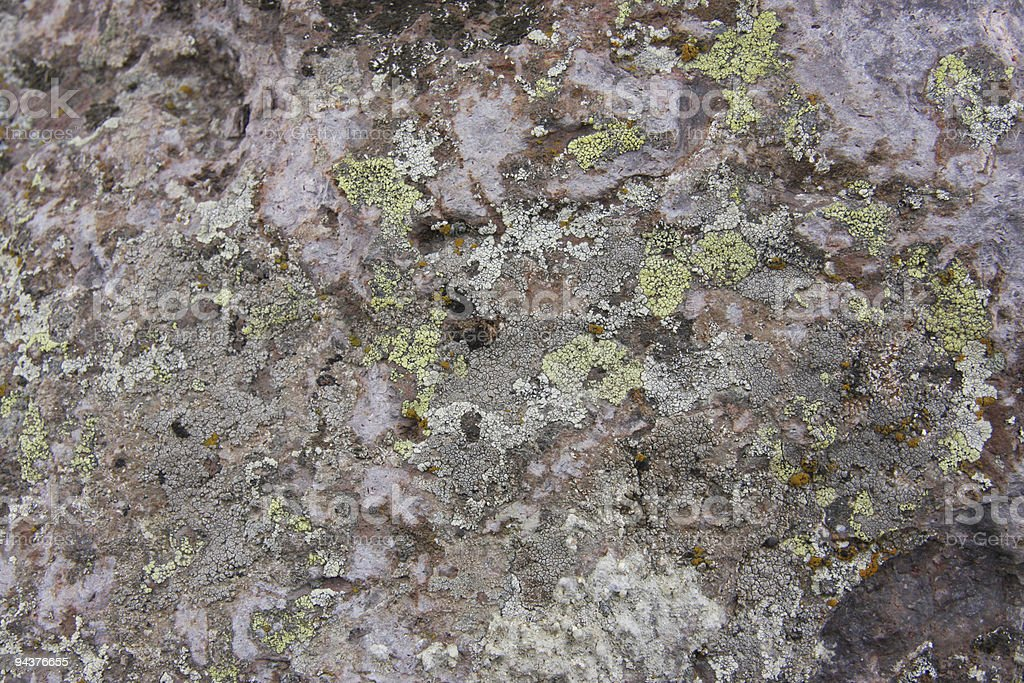 Fossil Rock Background royalty-free stock photo