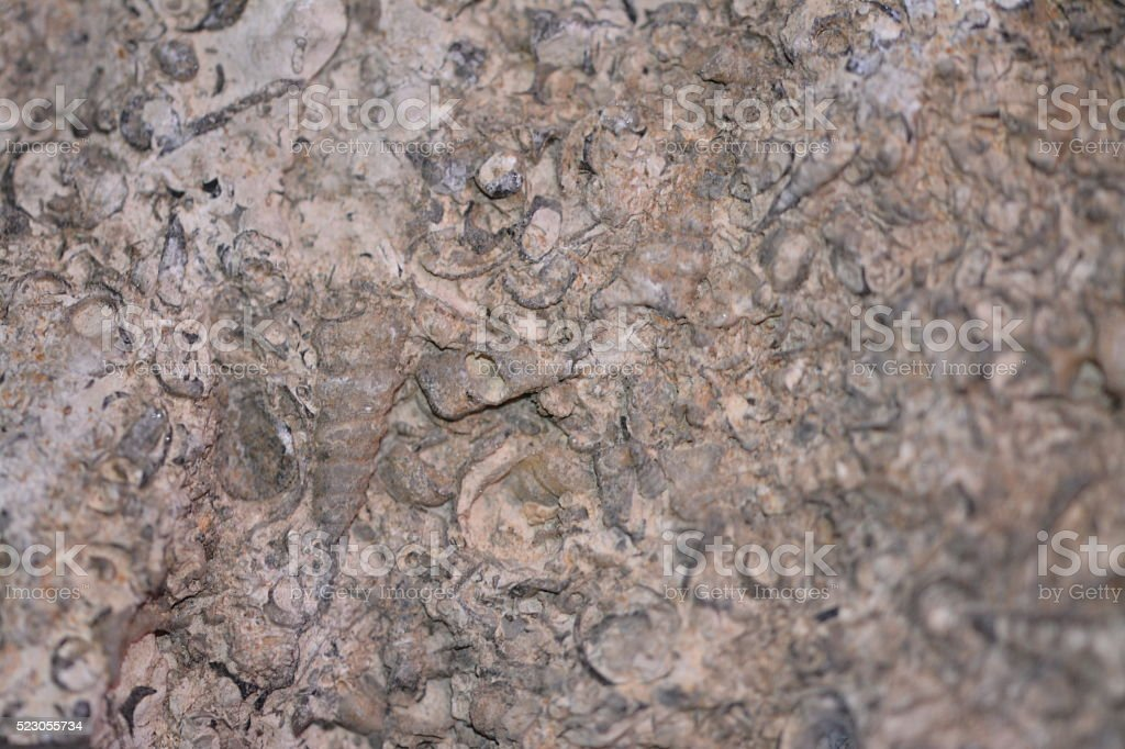 Fossil rock stock photo