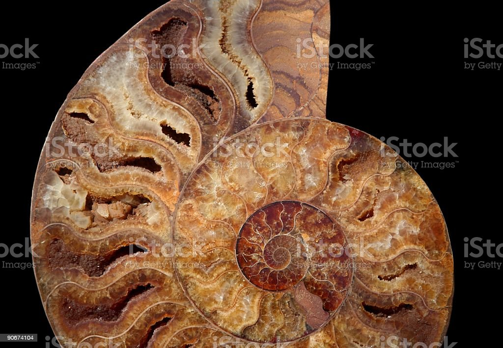Fossil: Shell stock photo