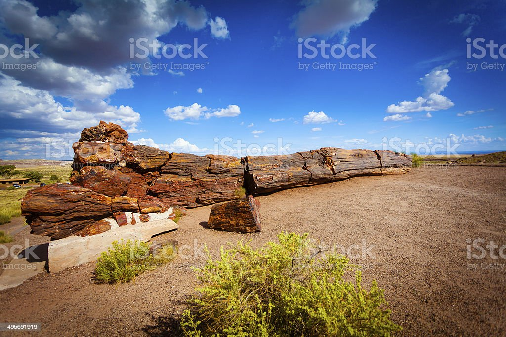 Fossil Tree in Pertified Forest, USA stock photo