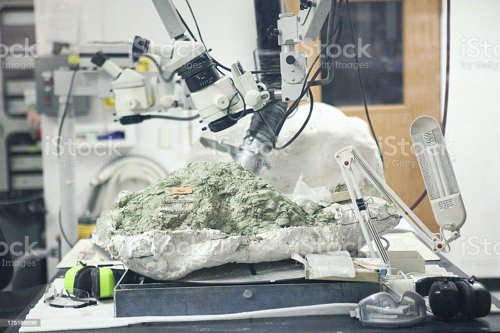 Fossil Under Microscope stock photo
