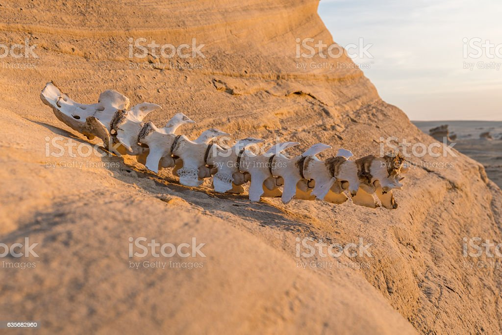 Fossilised dunes, Abu Dhabi stock photo