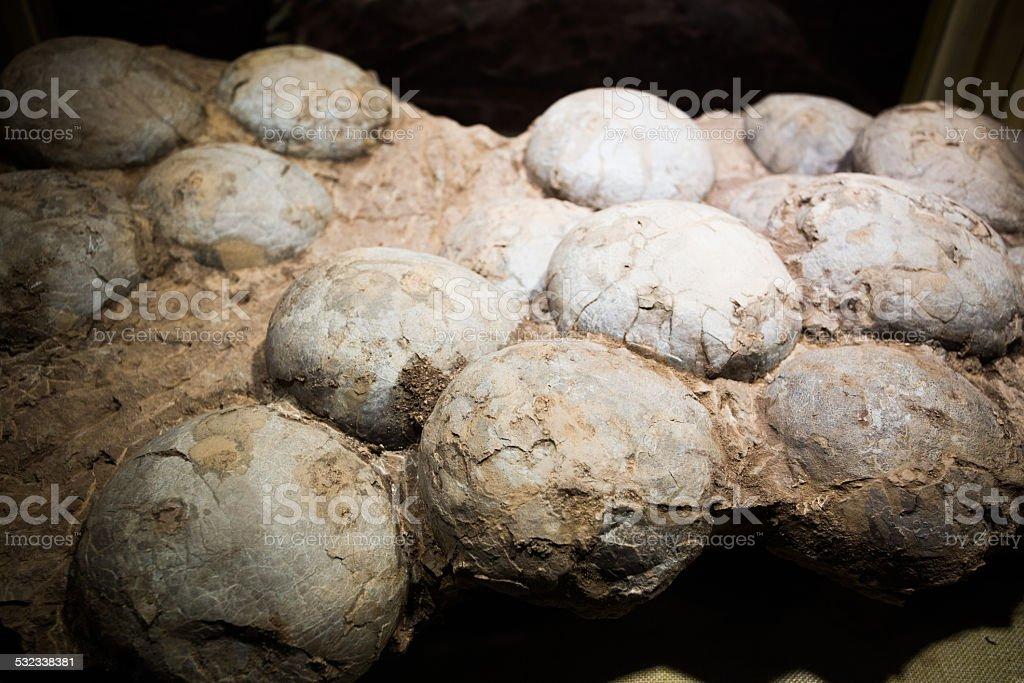 Fossilised eggs of a Hadrosaur dinosaur stock photo