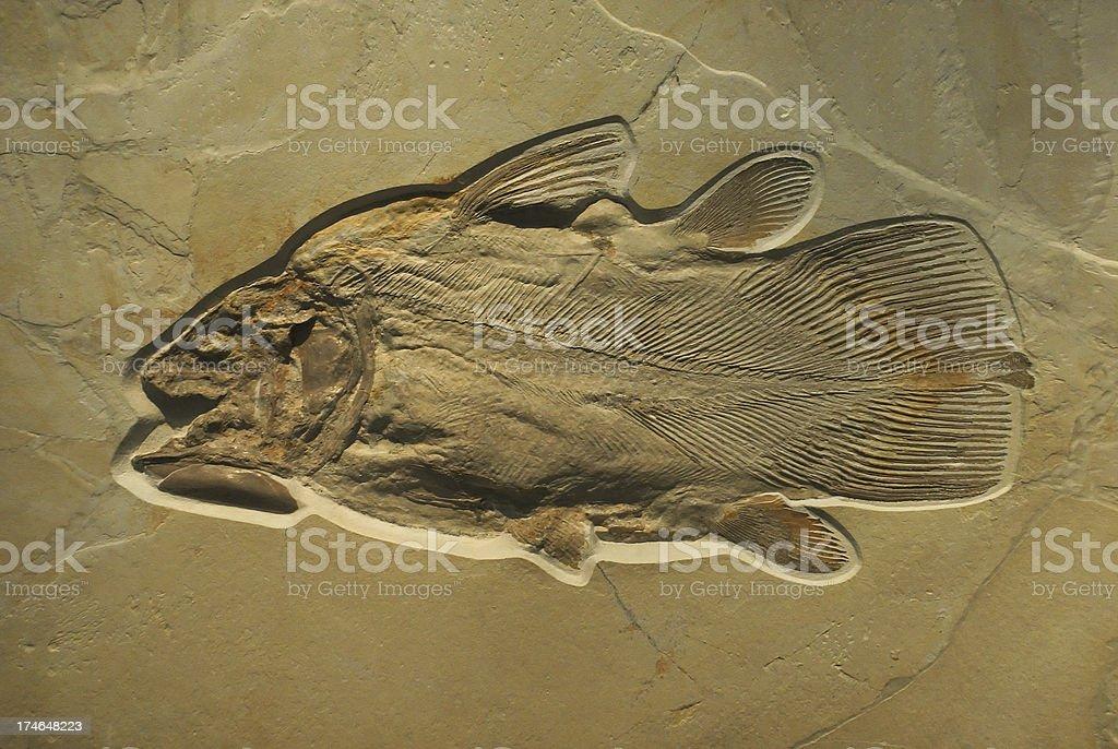 Fossilised Fish stock photo