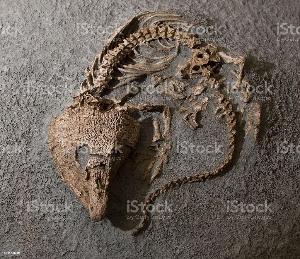Fossilized reptile royalty-free stock photo