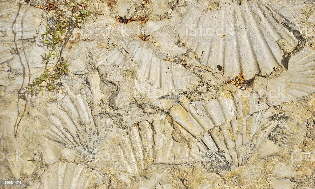 Fossilized shell imprints royalty-free stock photo