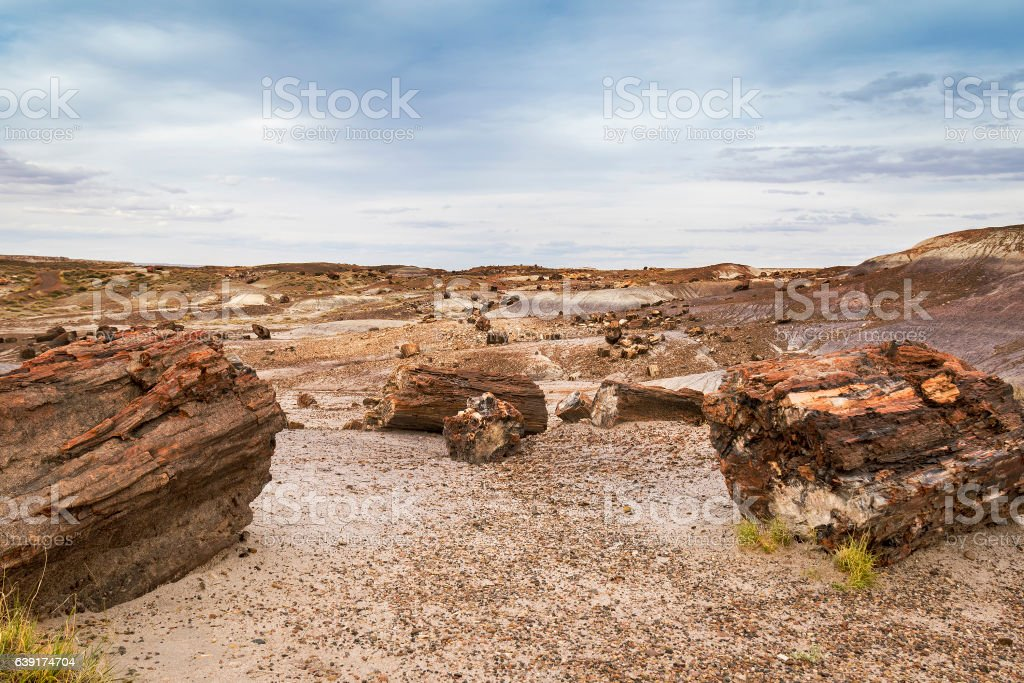Fossilized tree trunk in Arizona's Petrified Forest National Par stock photo