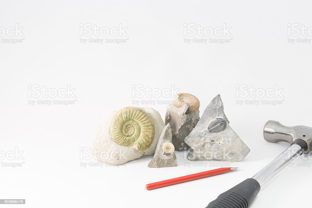 Fossils and excavation tools stock photo