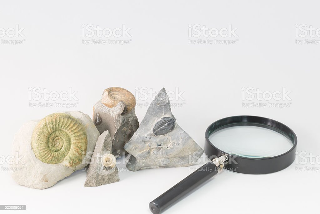 Fossils and loupe stock photo