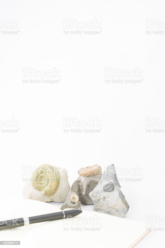 Fossils and notebook stock photo