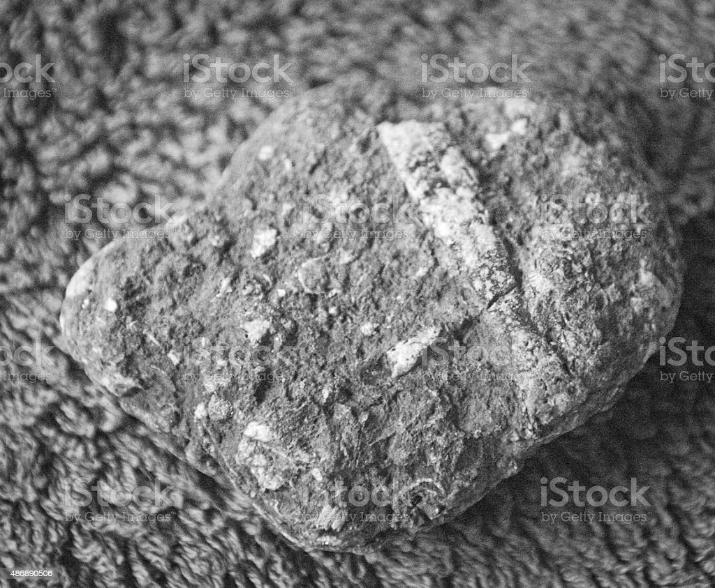 Fossils from the Jurassic Coast stock photo