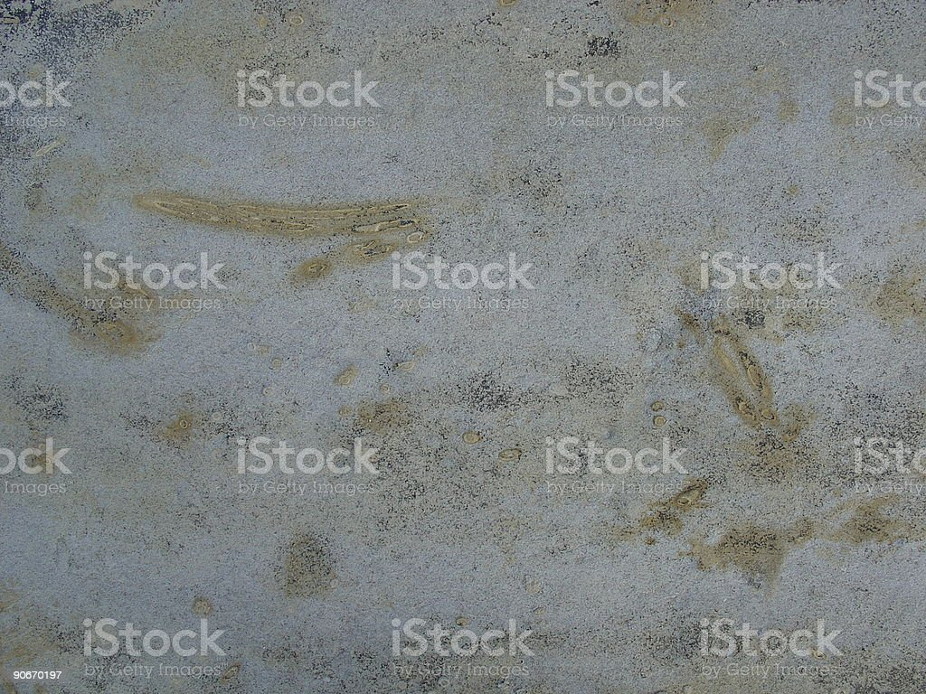 fossils in sandy rock stock photo