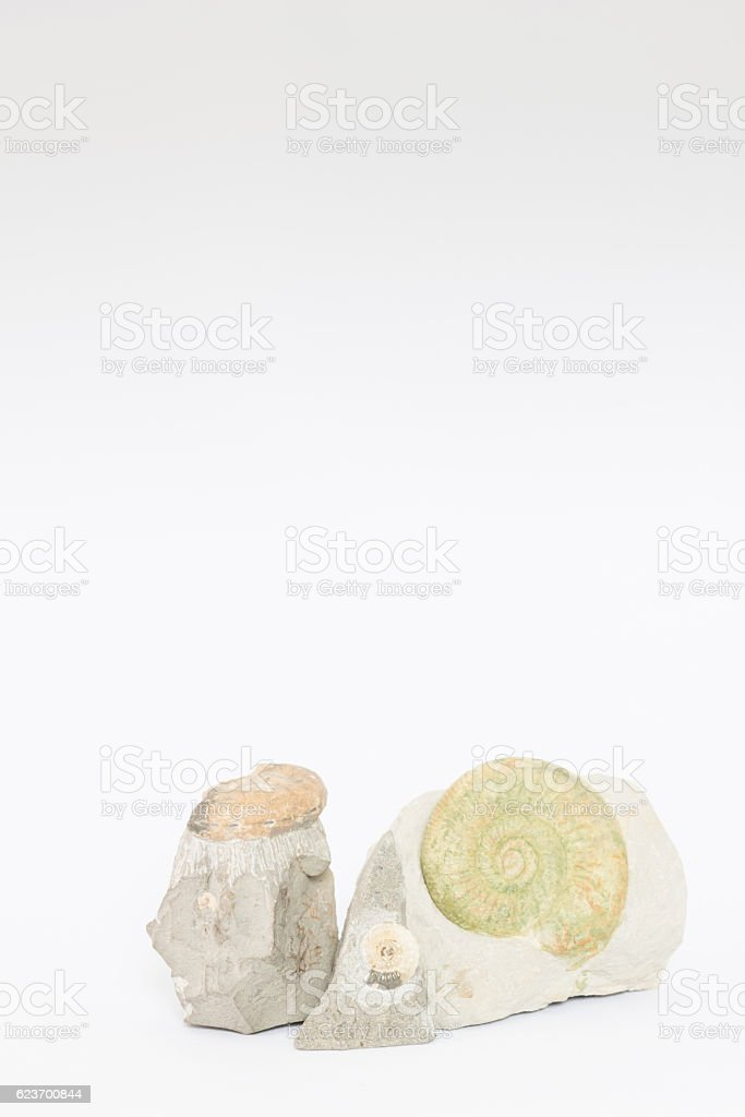Fossils stock photo
