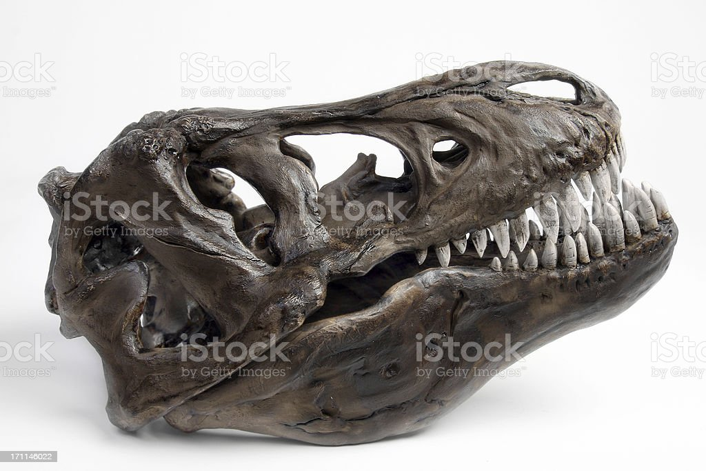 Fossiltrex head stock photo