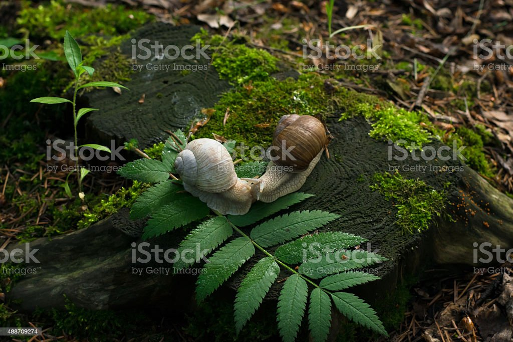Foto of a 2 snails on stump in the wood stock photo
