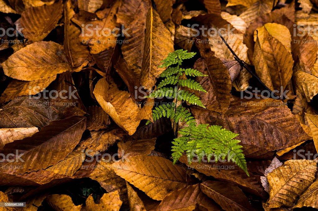 Fougères et feuilles mortes stock photo