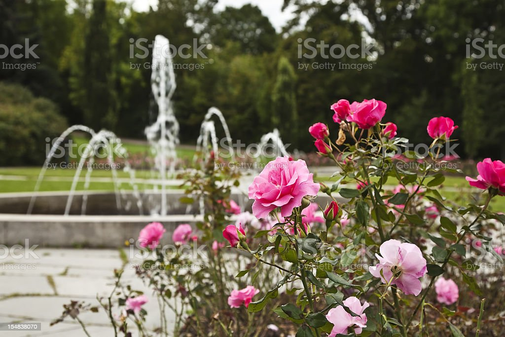 Fountain and roses in a park. stock photo