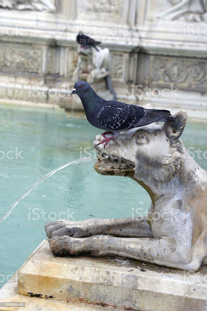 Fountain in Piazza del Campo, Siena, Tuscany, Italy royalty-free stock photo