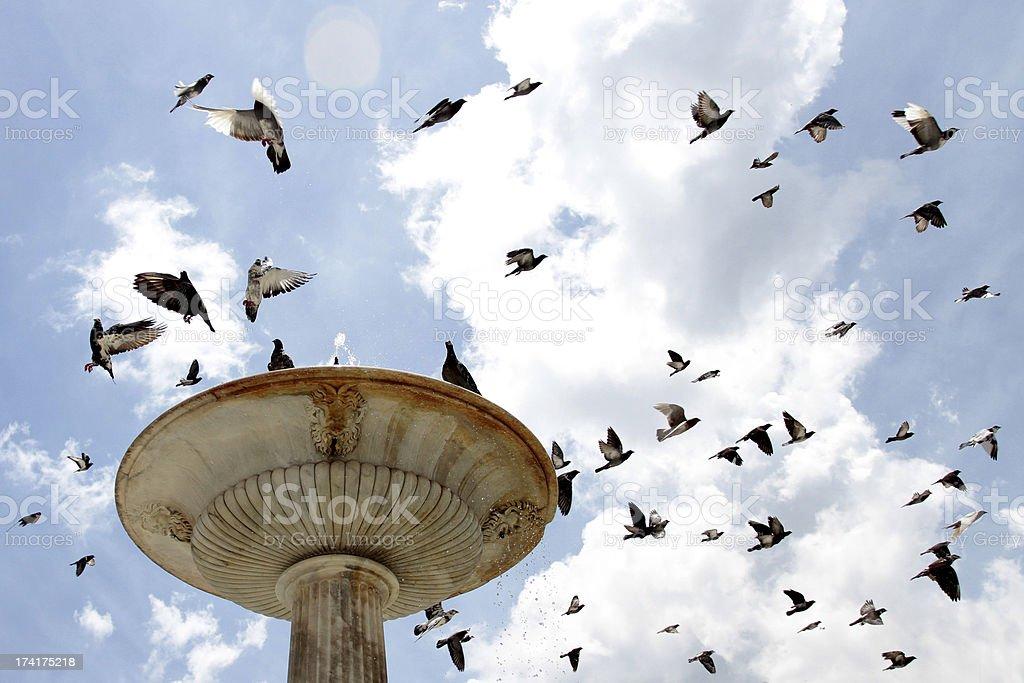 Fountain of birds royalty-free stock photo
