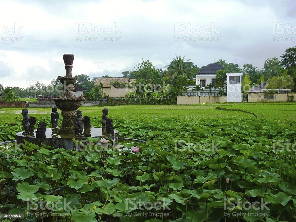 Fountain surrounded by lotus in Ubud, Bali royalty-free stock photo