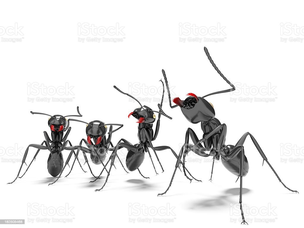 four ants royalty-free stock photo