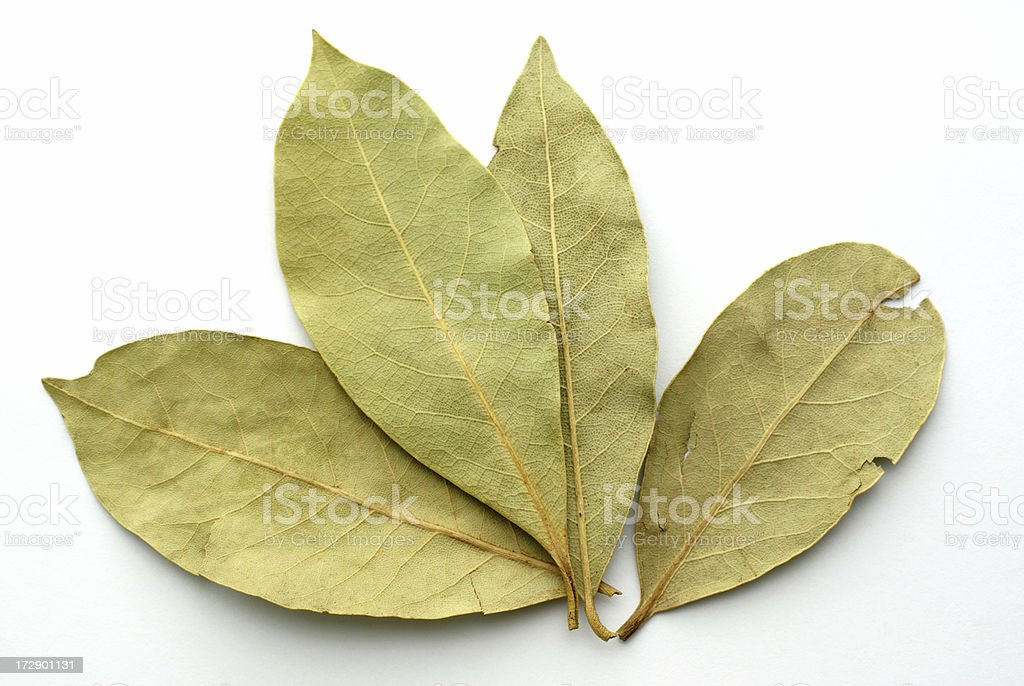 four bay leaves on white royalty-free stock photo