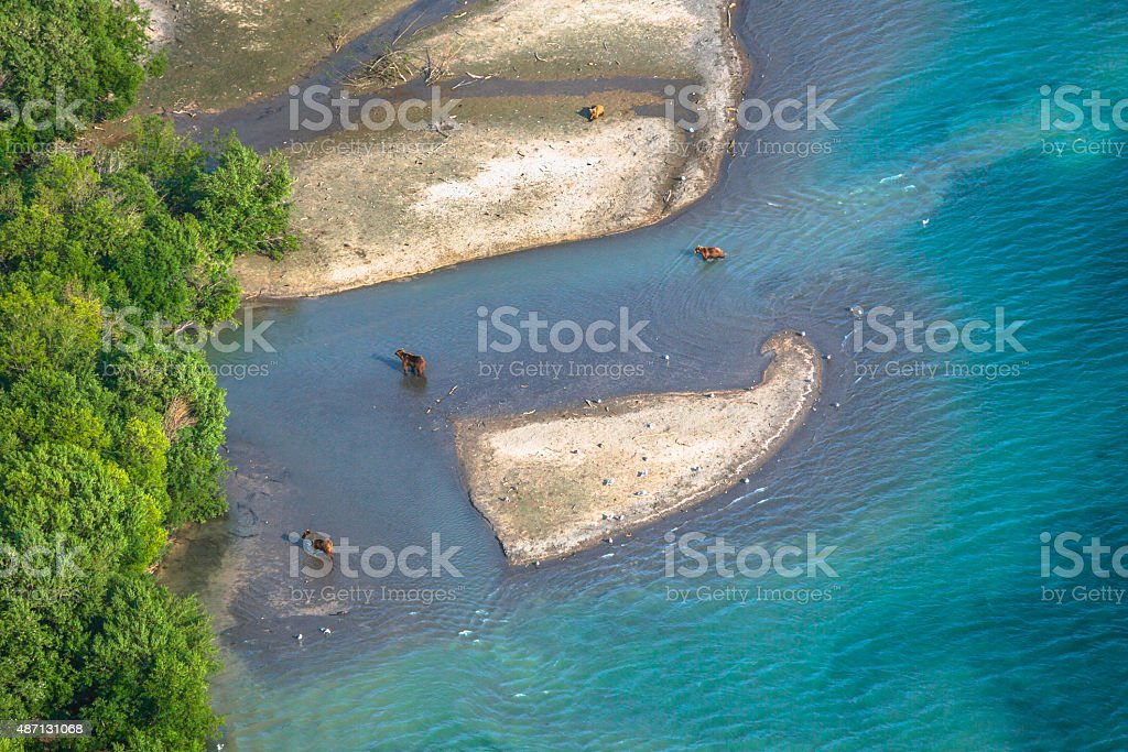 Four Bears Fishing at the Lake stock photo