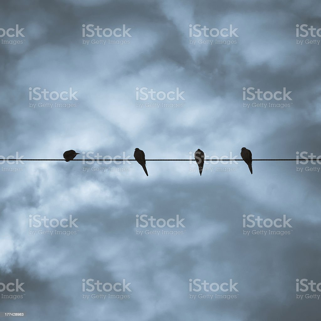 Four Birds on a Wire royalty-free stock photo