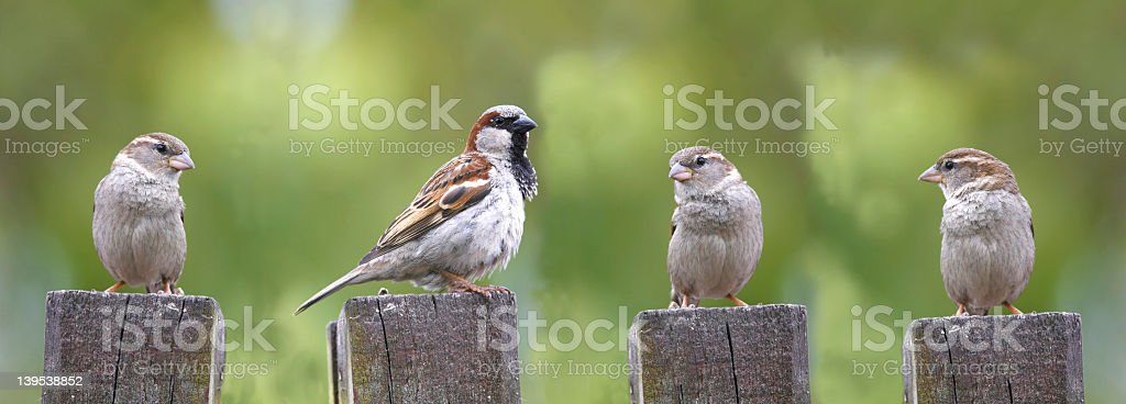 Four birds standing in line on a log stock photo