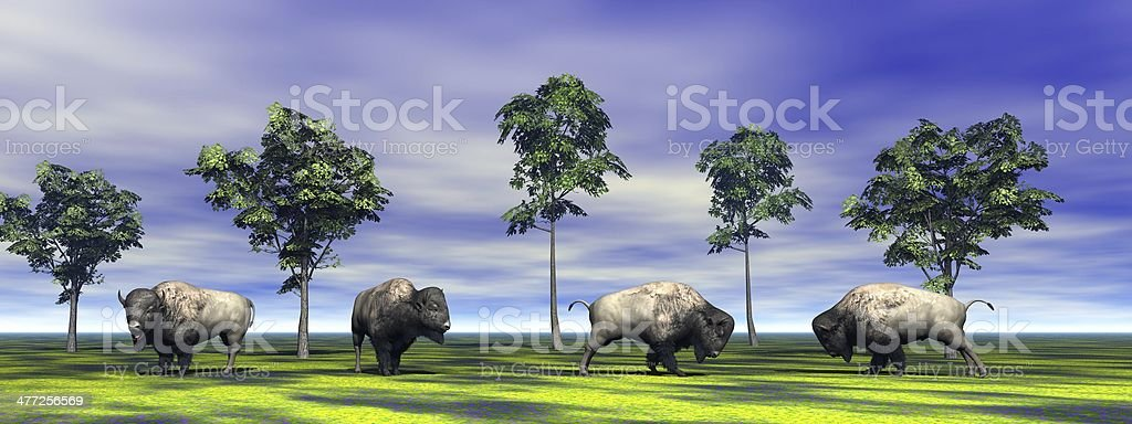 four bisons stock photo