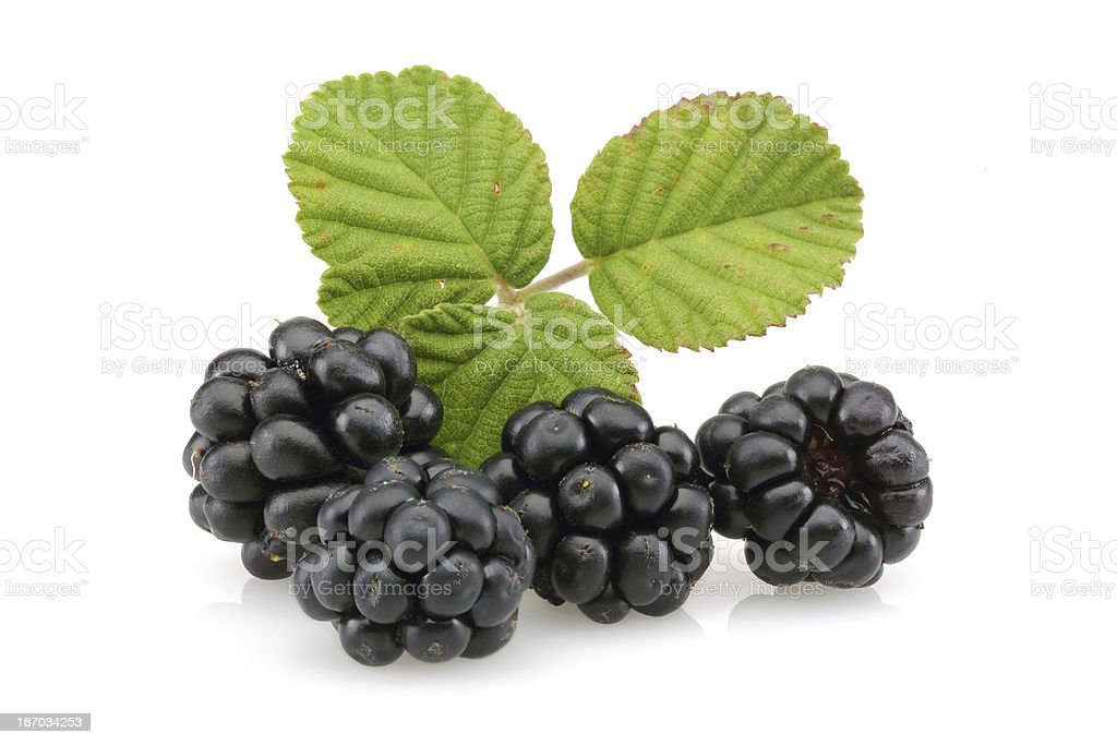Four Blackberries royalty-free stock photo