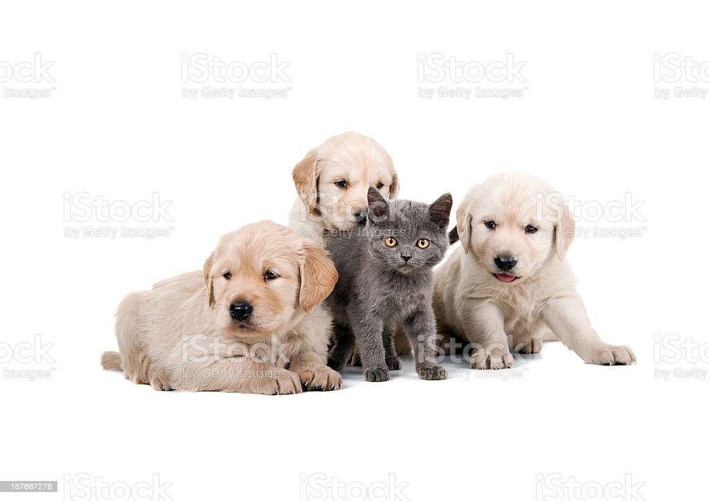 four buddies royalty-free stock photo