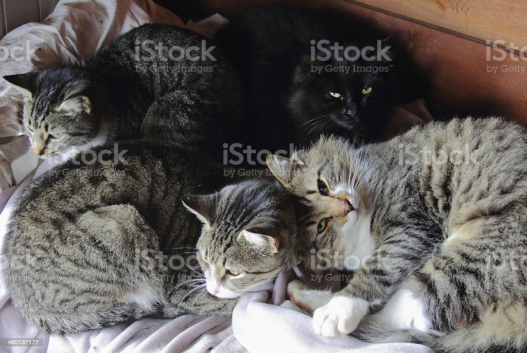 Four Cats Sleeping stock photo