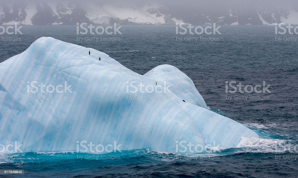 Four chinstrap penguins on an iceberg in Antarctica stock photo